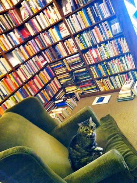 Literary Feline